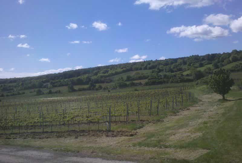 Weinbau Riegler-Dorner-1-min